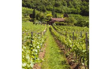 I segreti del Monte Orfano in Franciacorta
